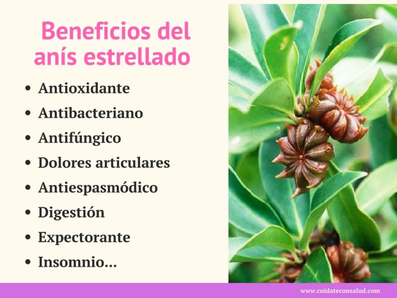 beneficios del anis estrellado para la salud